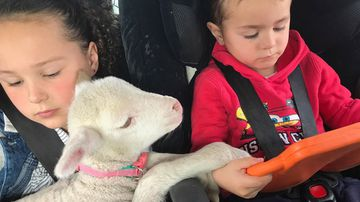 Drought-stricken farmers share images of hope with orphaned lambs