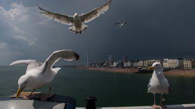 Drunk' seagulls run amok in seaside UK towns, vomit on