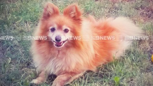 A dog has been attack and a man left injured after a kangaroo jumped over the fence of a Victorian home. (9NEWS)