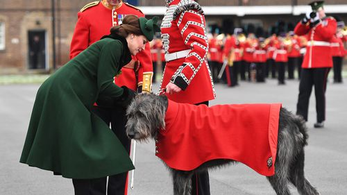 The Duchess of Cambridge presents a shamrock to Irish Guards mascot, Irish Wolfhound Domhnall. (PAA/AAP)