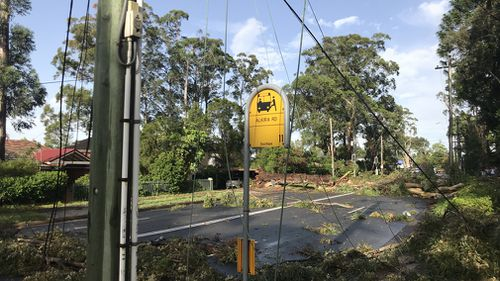 Sydney thunderstorms trees downed Carlingford