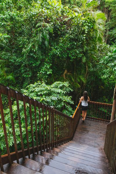 And the world's oldest rainforest