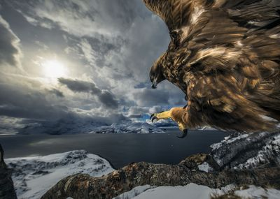 """Land of the eagle"" by Audun Rikardsen"