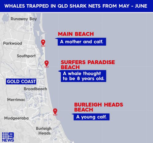 Four whales have been rescued from shark nets since the migration started in May.