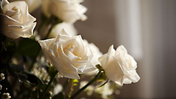 A draft report has found in NSW funeral providers are not adequately disclosing costs to grieving families.