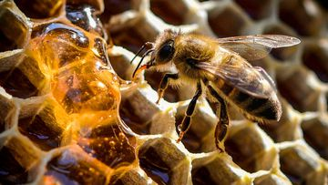 Bushfire-hit beekeepers in fight for recovery