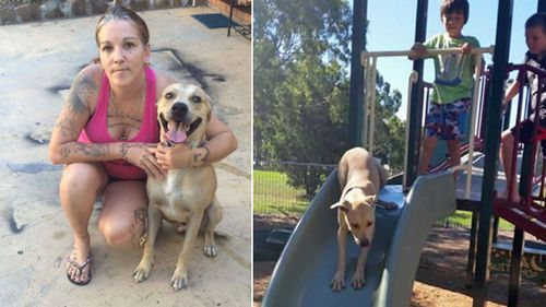 Family wants dog back after shelter gives it to new owners
