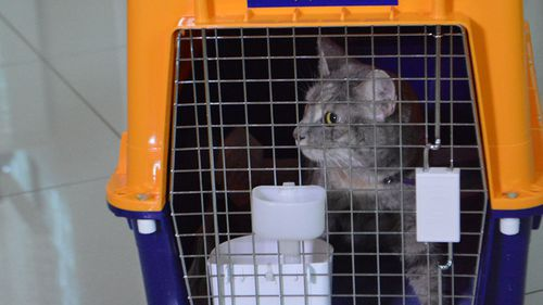 Pippa the cat was securely stored in a crate before travel. (JetPets)