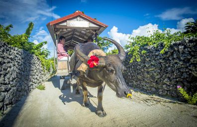 Ride in a cart pulled by a water buffalo on Taketomi Island