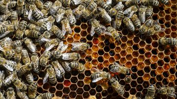 Russian-Ukrainian man suspected of being at centre of $1.3m bee heist