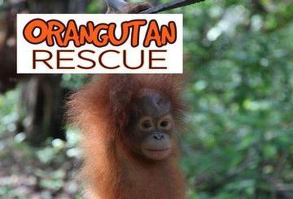 Orangutan Rehab