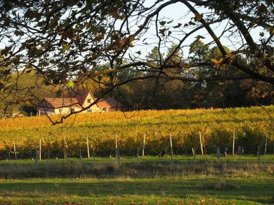 8. Holm Oak Vineyards, Tas