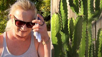 'Are you serious?' Granny denies plant stealing spree