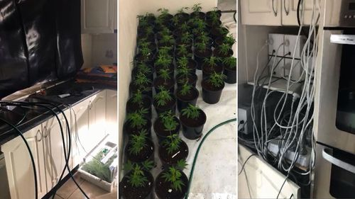 The hydroponic equipment and cannabis plants were spread out in homes across Sydney in an effort to conceal the operation, police say. Picture: NSW Police