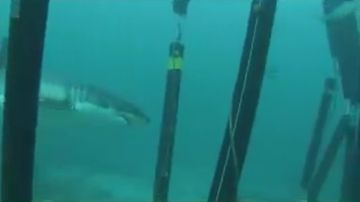 9RAW: Sharksafe barrier claims '100 percent' success deterring sharks