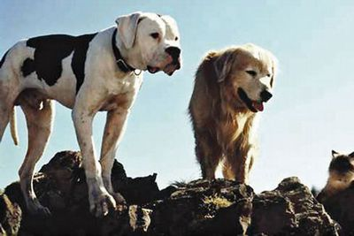 Young bulldog Chance and older golden retriever Shadow pair up with a Himalayan cat on a memorable journey away from their owners.