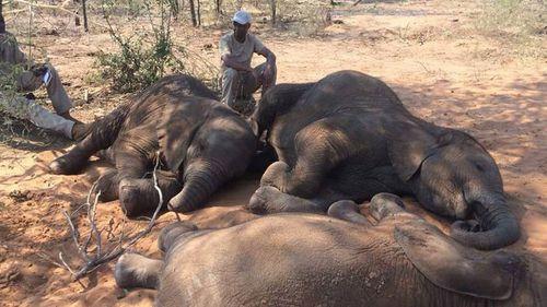 Nearly 90 elephants found dead near Botswana wildlife sanctuary