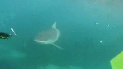 Teens chased by shark screamed so loud underwater their father heard it