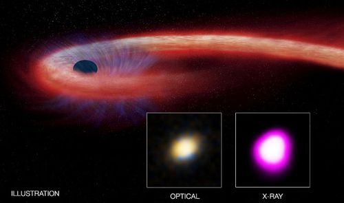 The graphic illustrates the Tidal Disruption Event and how its effects are observed by astronomers. (Image: NASA).