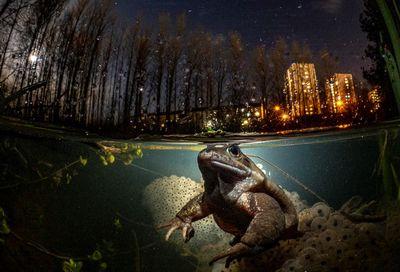 """British Underwater Photographer of the Year, My Backyard Winner: """"While You Sleep"""""""