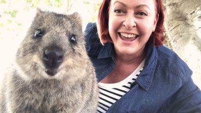 Getting a quokka selfie is trickier than you think