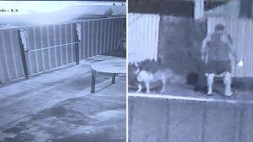 Adelaide home arson attack petrol CCTV
