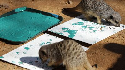 'Do you think it really conveys the struggle of all meerkat kind? Or have I just painted a bug?' (AAP)
