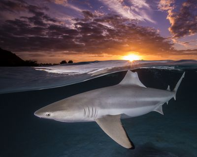 2021 Ocean Photography Awards -  Inaugural Female Fifty Fathoms Award winner