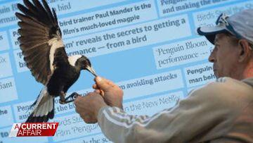 Animal wrangler accused of not returning Penguin Bloom
