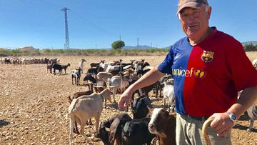 Farmer vows to move his sheep across the border if Catalonia splits from Spain