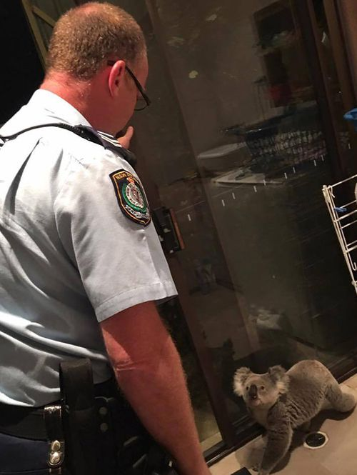 Koala caught red-handed by police inside Sydney home