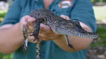 Crocodile park hunting 'fit and willing' new employees