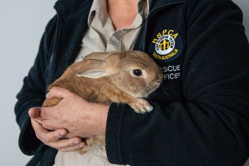 The bomb squad was called to Adelaide Airport - but this was all they found. Picture: RSPCA/Koren Helbig