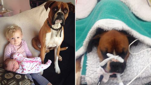 Three-year-old boxer Mack and Jo Shaw's two children. (Jo Shaw/GoFundMe)