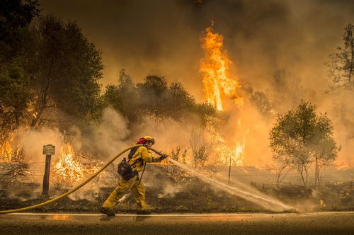 A firefighter waters down a back burn near the town of Igo. Picture; AP