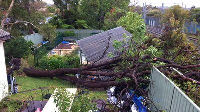 A tree has fallen down across a backyard in Cronulla during wild weather across NSW. (Aleysha Tombleson)