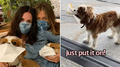 Courteney Cox, Jennifer Aniston, reunion, Instagram, video, coronavirus, masks, dogs