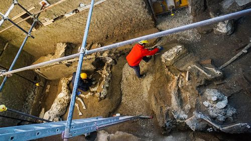 Experts work on horse skeletons in an ancient stable during excavations in Pompeii, near Naples, Italy
