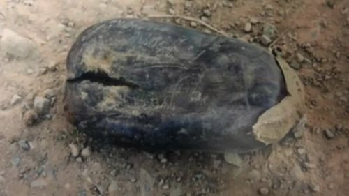 An image of an eggplant found at the Goulburn Valley farm. (Supplied)