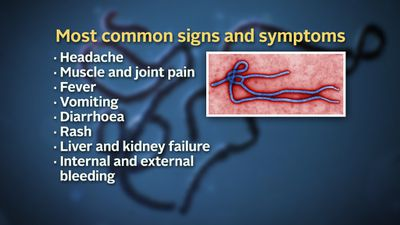 <b>How does Ebola kill? </b> Initial signs and symptoms of Ebola include a flu-like stage of headache, muscle pain and fever. Vomiting, diarrhoea and rash are also common. These can all appear within the 8-21 day incubation period. All people infected with Ebola then show signs of blood flow problems. If the infected person does not recover they usually die from organ failure within seven to 16 days after first symptoms.