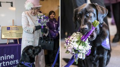 """Queen Elizabeth visits the""""Canine Partners"""" charity, November 2017"""
