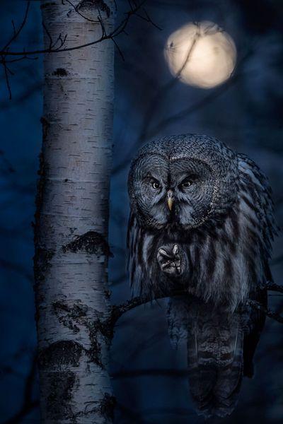 'Night hunter'. Category: Best Portrait. Bronze Award Winner.