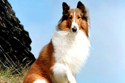 Yet another dog who shares her name with the title of her classic TV series (she's also starred in several films.)