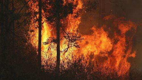 Firefighters battle bushfires in Busbys Flat, northern NSW.