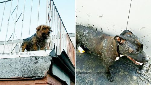 Dogs recovering following rescue from 'melting' rooftop