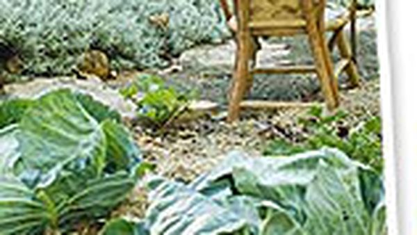 Get growing with winter garden ideas