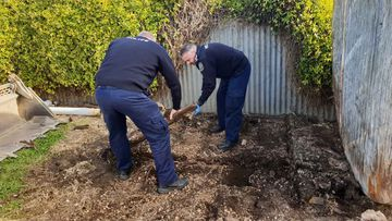Police officers dig up part of the backyard in Maitland, South Australia, where Colleen Adams used to live.