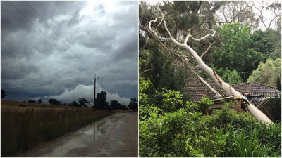 Tree toppled in SA as storms roll into south-east
