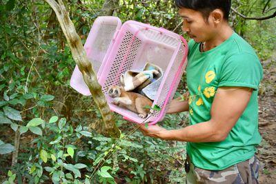 <strong>The Sepilok Orangutan Rehabilitation Centre, Malaysia</strong>