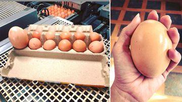 No yolk: Massive egg laid on farm had second egg inside